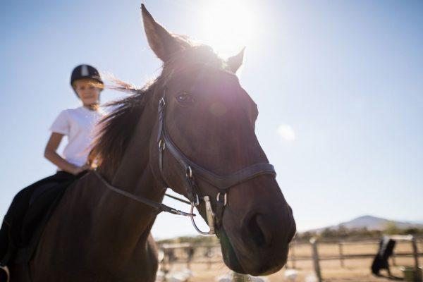 versicherungsvergleich pferdehaftpflicht