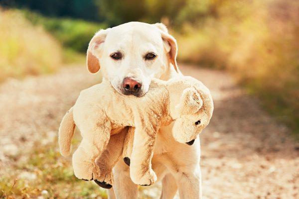 versicherungsvergleiche hundehaftpflicht